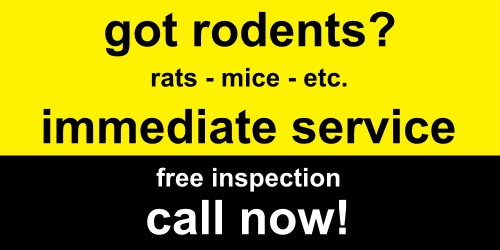 Rodent exterminating - We'll get rid of your mice and rats fast - 100% Guaranteed 100% Safe. We offer immediate rodent control - Call today for free rodent inspection and no obligation quote.